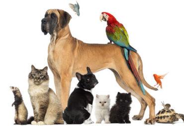 hrana si accesorii pentru animale